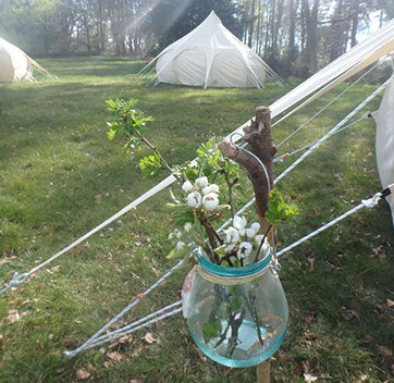 image of wild revive lotus belle tent in field